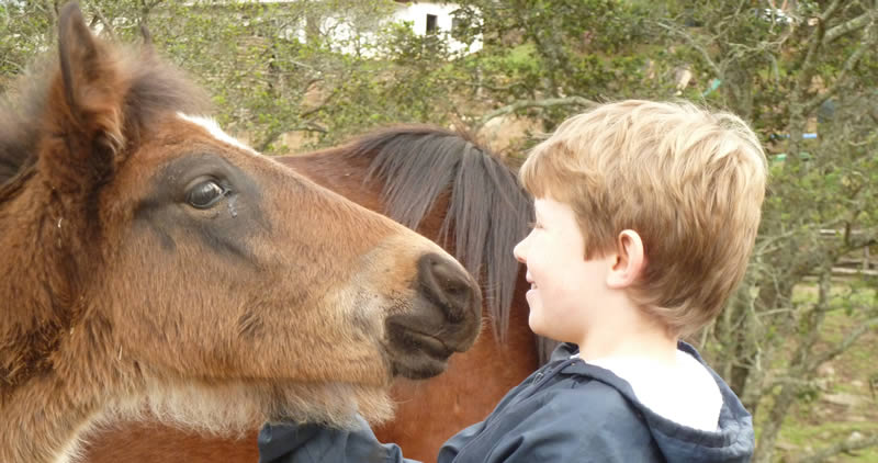 A young boy being nuzzled by a foal.